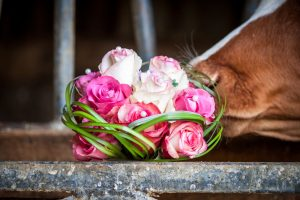 Farm Diversification - Weddings