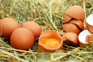 Farm Diversification Egg Production